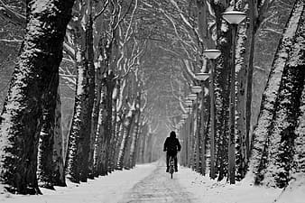 Person in black jacket walking on snow covered pathway between bare trees during daytime