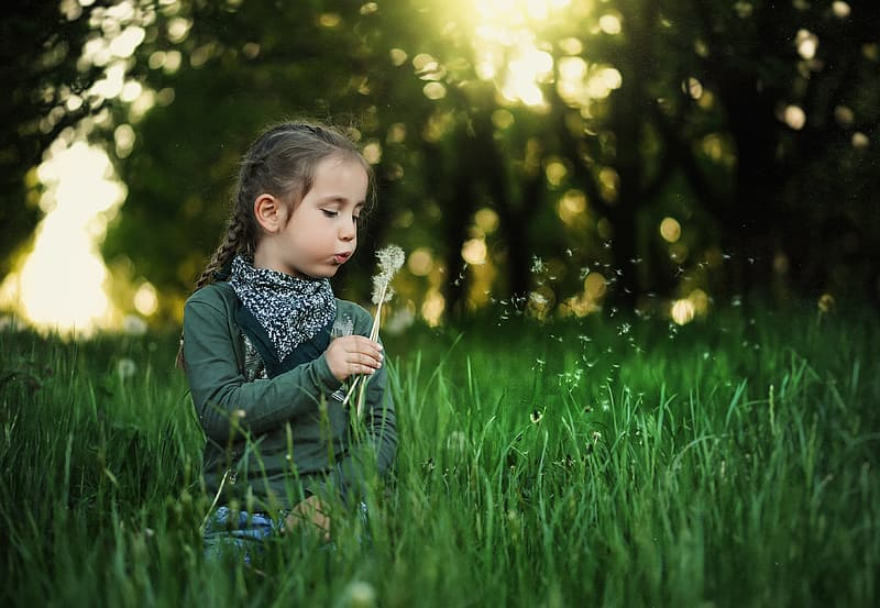 Photography of girl sitting on grass blowing dandelion during golden hour