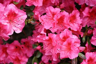Pink hibiscus flower lot
