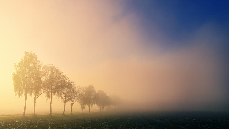Green trees on green grass field during foggy day