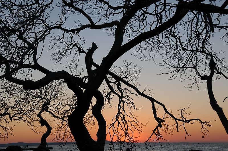 Silhouette of tree during golden hour at sea