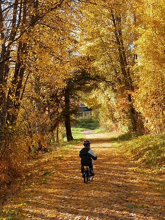 Child riding bicycle on road between brown leaf tree during daytime