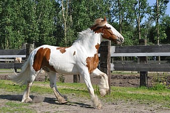 White and brown horse beside fence
