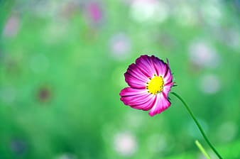 Pink petaled flower in soft-focus photography