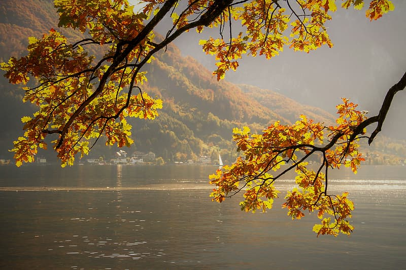 Yellow leaves tree near body of water during daytime