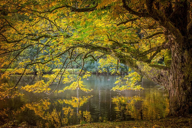Brown tree above body of water during daytime