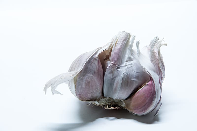 White and purple flower bud