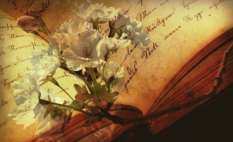 White petal flower on top of opened book