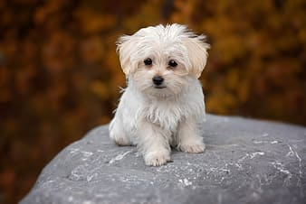 Selective focus photography of long-coated white puppy