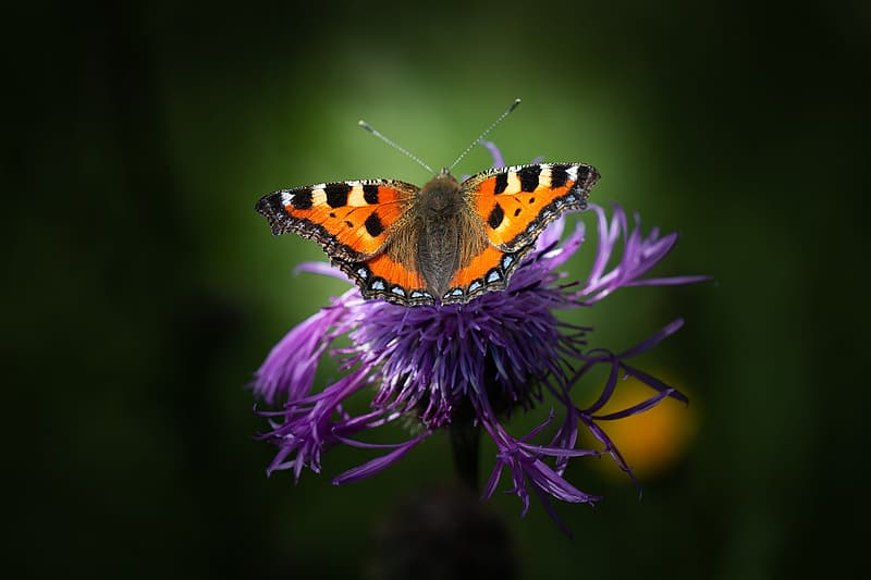 Selective photo of orange and black butterfly perched on flower