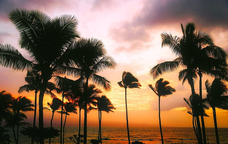 Silhouette of coconut palm trees near body of water during golden hour