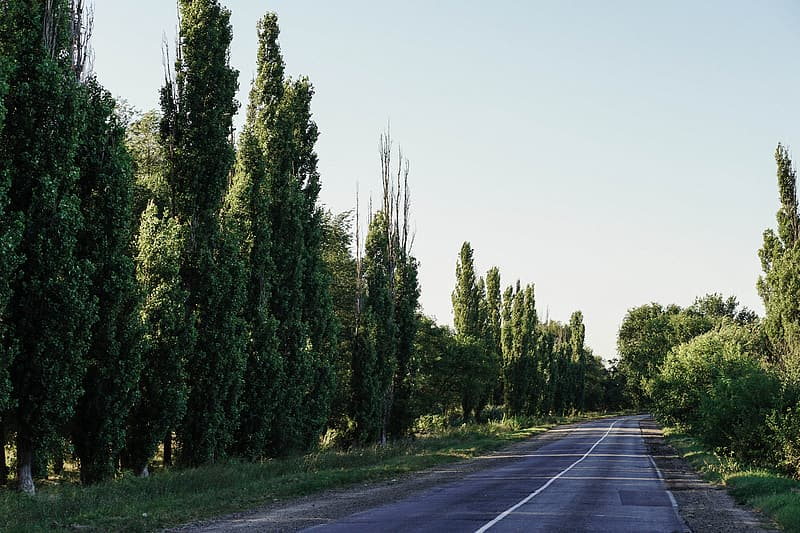 Gray asphalt road between green trees during daytime