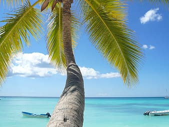 Coconut tree near white boat