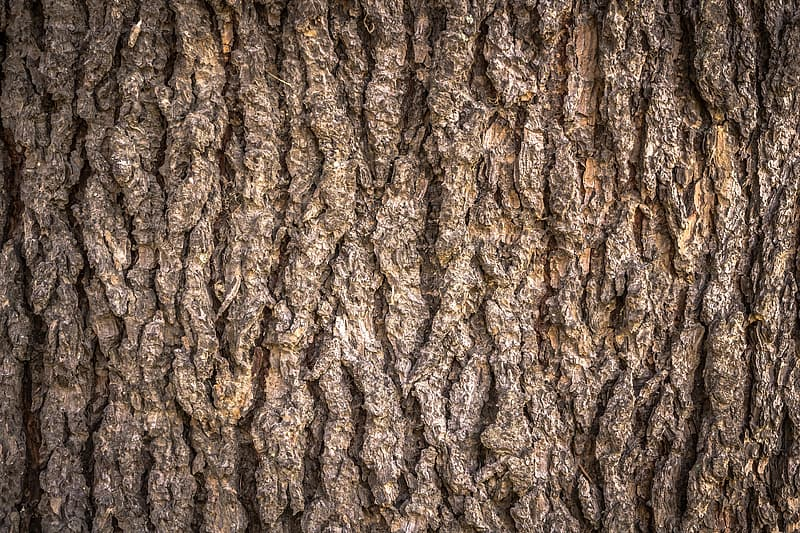 Untitled, wood, texture, bark, plants, nature, pattern, surface, wild, skin