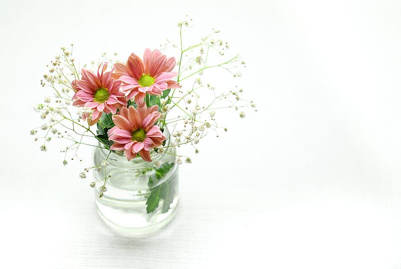 Pink daisy flowers and baby's breath flowers in clear glass vase