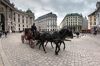 Horse carriage travelling in city