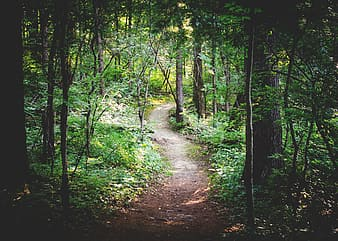 Desired pathway surrounded by green leaf trees