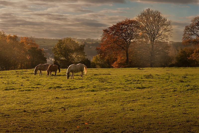 White and brown horses on green grass field