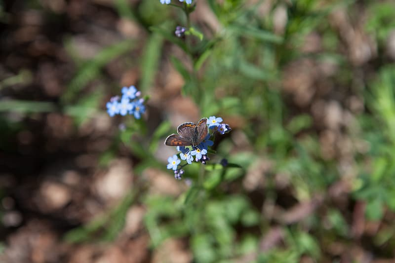 Blue flower with brown and black butterfly