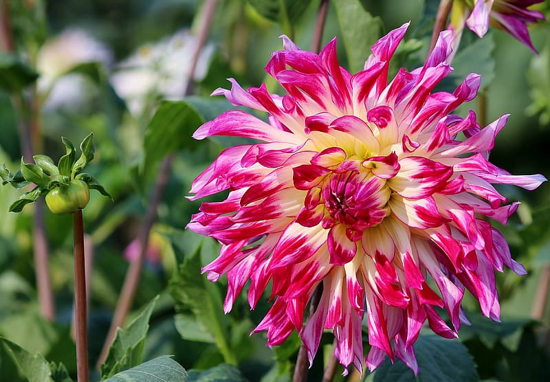Shallow focus photography of pink and yellow flower