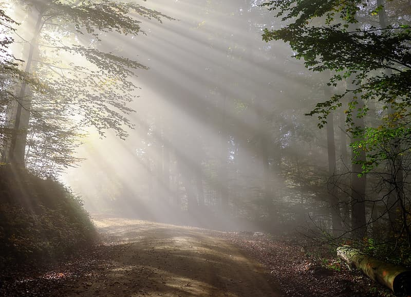 Forest pathway with sunlight photography