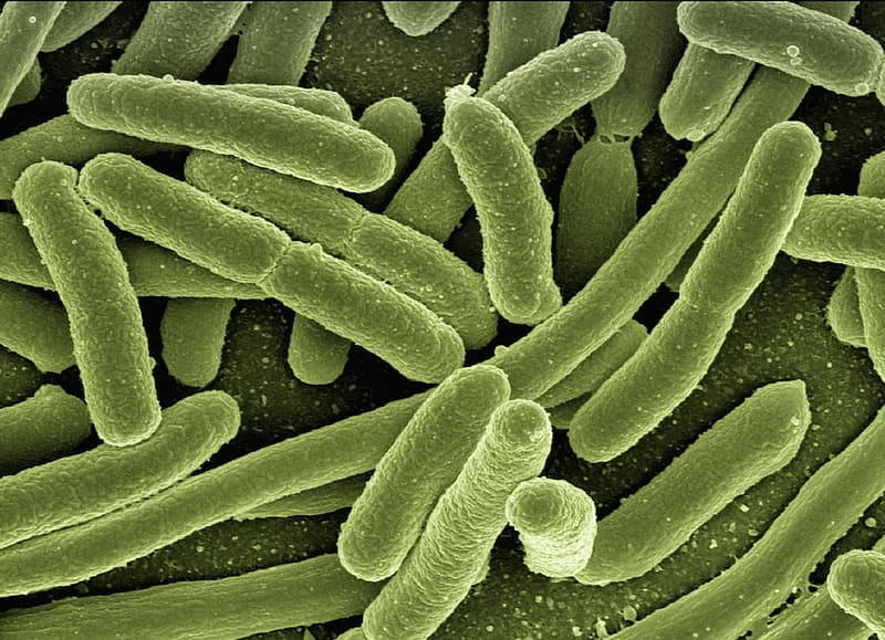 Micro photography of bacteria
