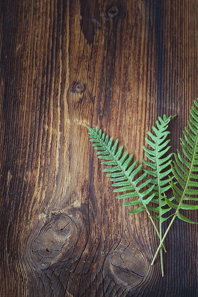 Photography of green leaves on brown wooden board