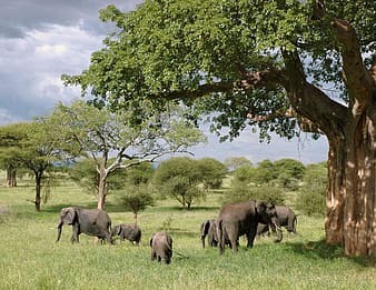 Gray elephant near brown wooden tree