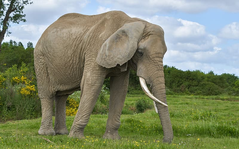 Brown elephant on grass field during daytime