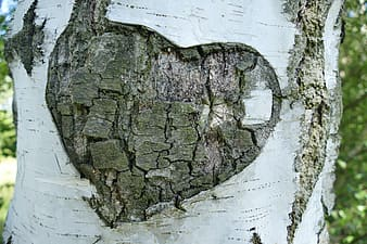 Gray and brown heart wood carved