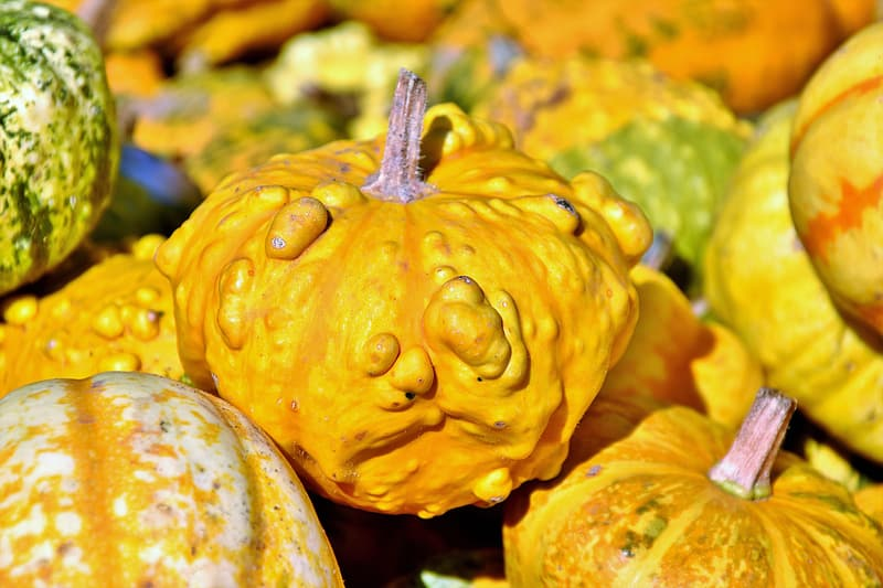 Yellow pumpkin in close up photography
