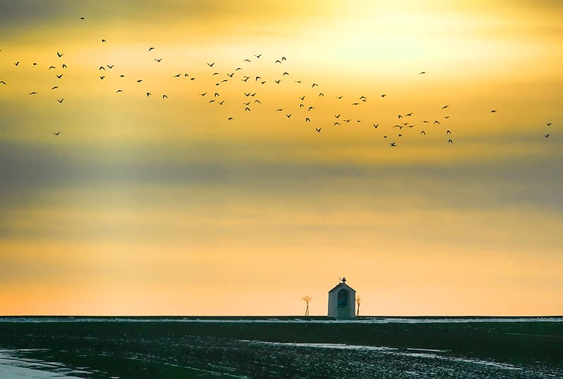 House under yellow sky with birds flying