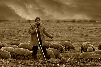 Man holding stick surrounded by sheep