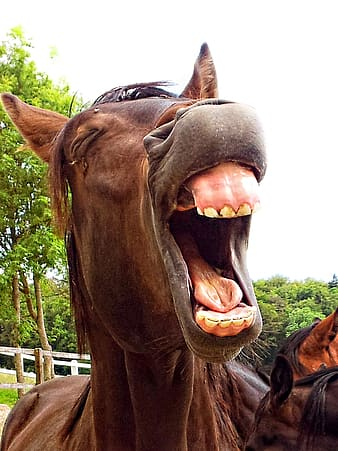 Photo of brown horse opening mouth
