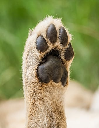 Shallow focus photography of an animal paw