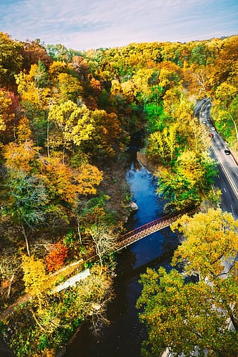 Aerial view of bridge in the middle of forest during daytime