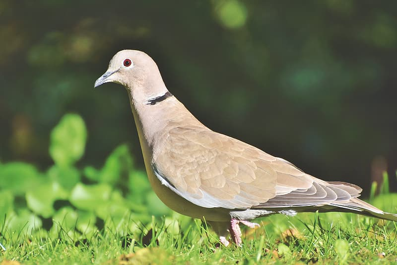 Brown and white bird on green grass during daytime