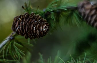 Close-up photography of brown pinecone