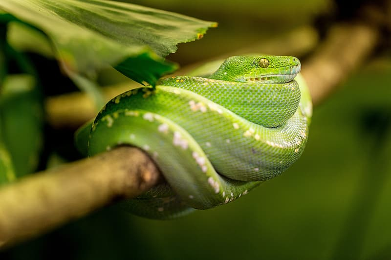 Green snake on brown tree twig