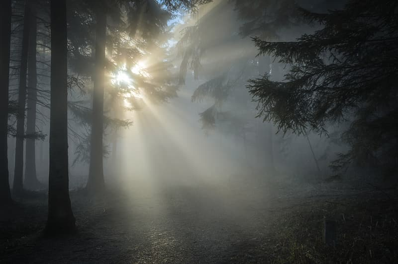 Pine tree covered with fog taken at daytime