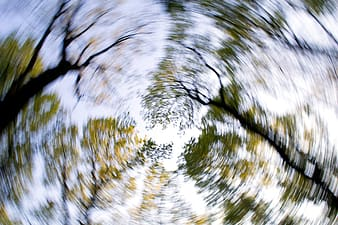 Worm'seye view photography of trees