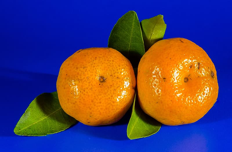 Two citrus fruits