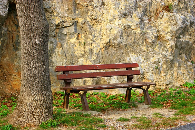 Brown bench beside tree