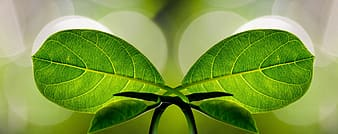 Two green leaves
