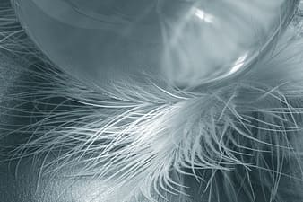 Closeup photo of white feathers