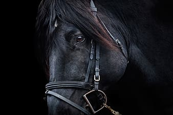 Black horse in closeup photography