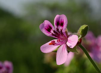 Shallow focus photo of pink petaled flower