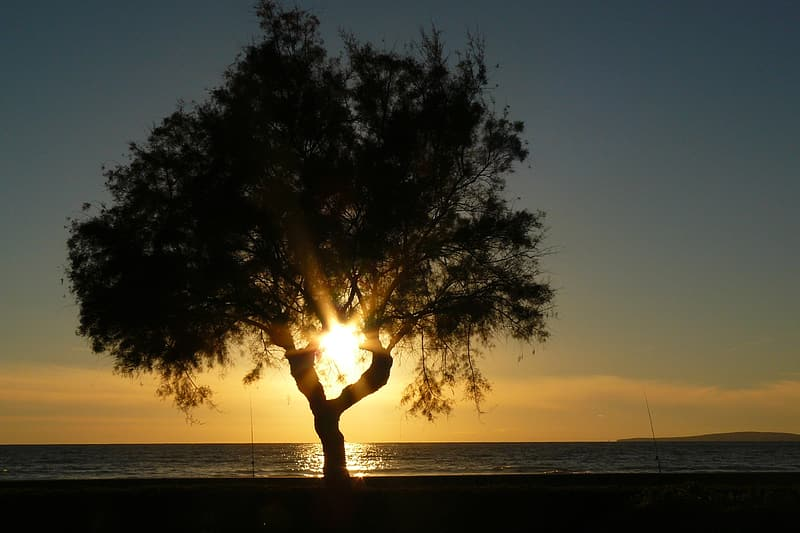 Silhouette of lone tree