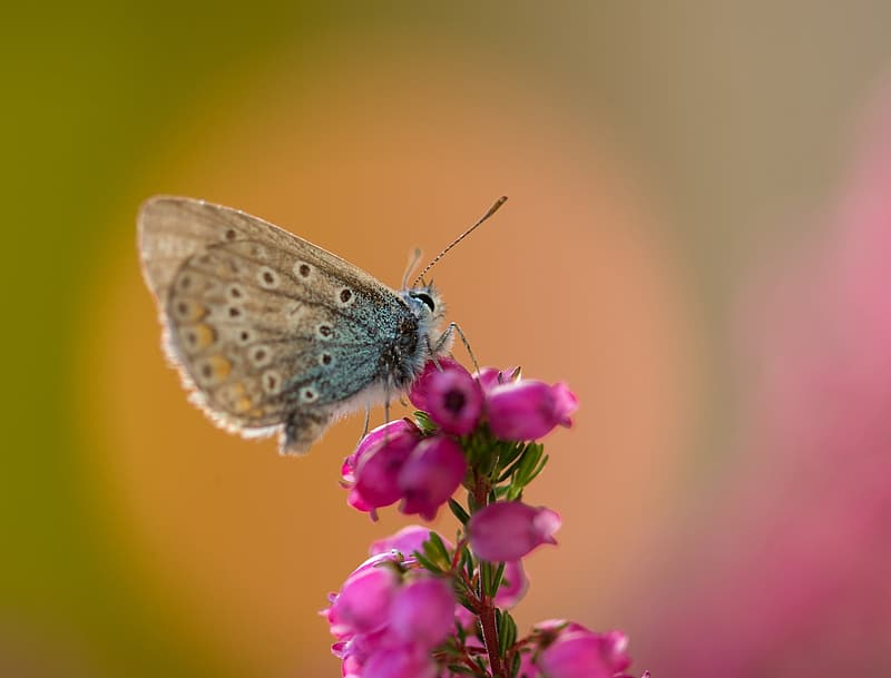 Close up photo of brown butterfly perched on pink flower