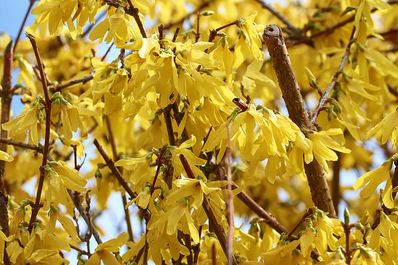 Yellow leaves on brown tree branch during daytime